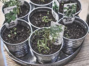 认识像植物根一样生长的机器人Plantoid