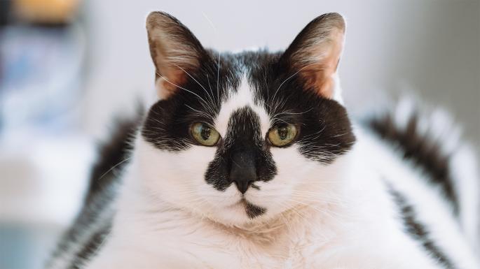 索尼相机现在可以聚焦在宠物的眼睛上